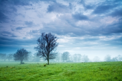 Green Day by Evgeni Dinev
