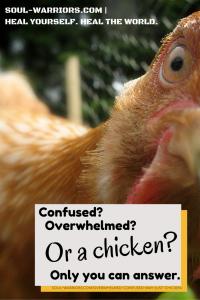 Just a chicken- #HealYourselfHealtheWorld